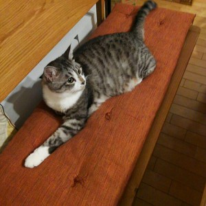 長椅子猫と座布団
