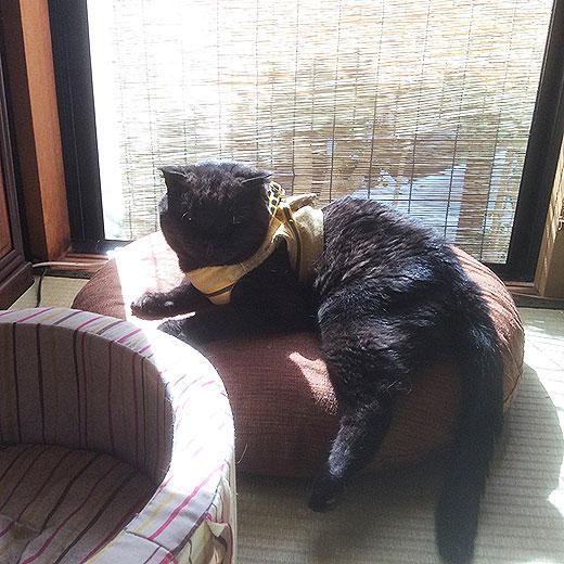 ペット用円座布団オーダーメイド