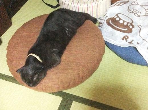 猫用座布団の通販